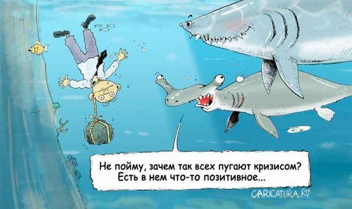 Смешные картинки про акул с надписями