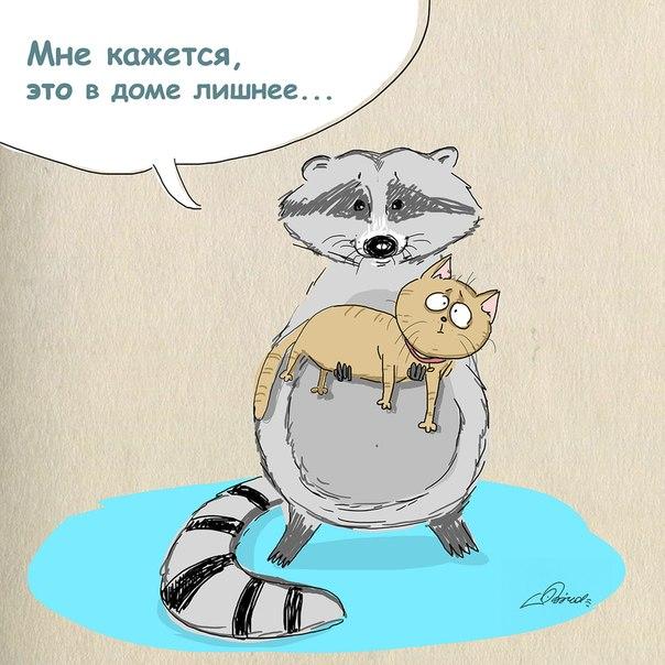 Картинки по запросу анекдот про енотов