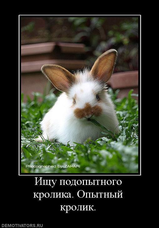 Животные рисунок, картинки приколы про кроликов