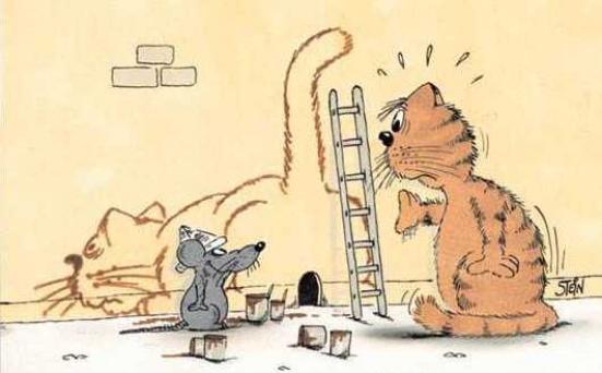 Картинки по запросу анекдот про крысу